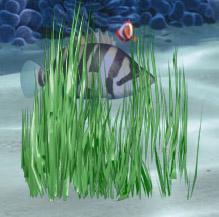 Waterplant11