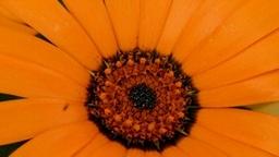 FlowerTimelapse