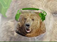 BearShare Bear