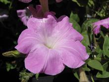 Flower-Mashhad