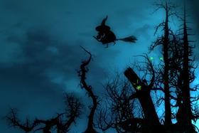 Woods at Night WS