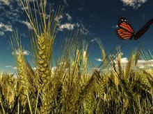Golden field -  #summer09