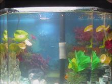 My Fish tank 2