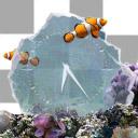 Marine Aquarium Time