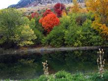 Fall on the Wasatch