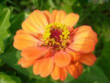Silent Flower