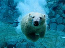 Underwater Teddy