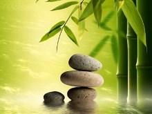 Bamboo Pond