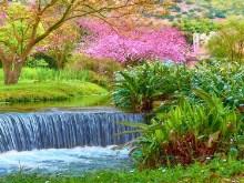 Garden Spring Falls