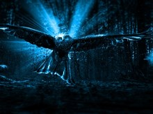 Bird of Prey HD