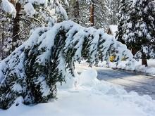 Droopy Christmas Tree