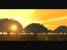 Trees2003