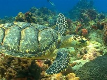 Sea Turtle in HD