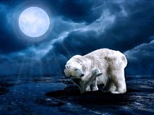 Polar Bear Moon