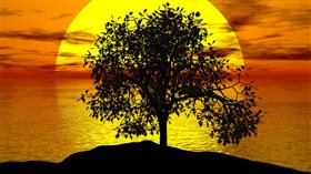 Sunset Tree HD
