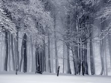 Foggy Winterforest